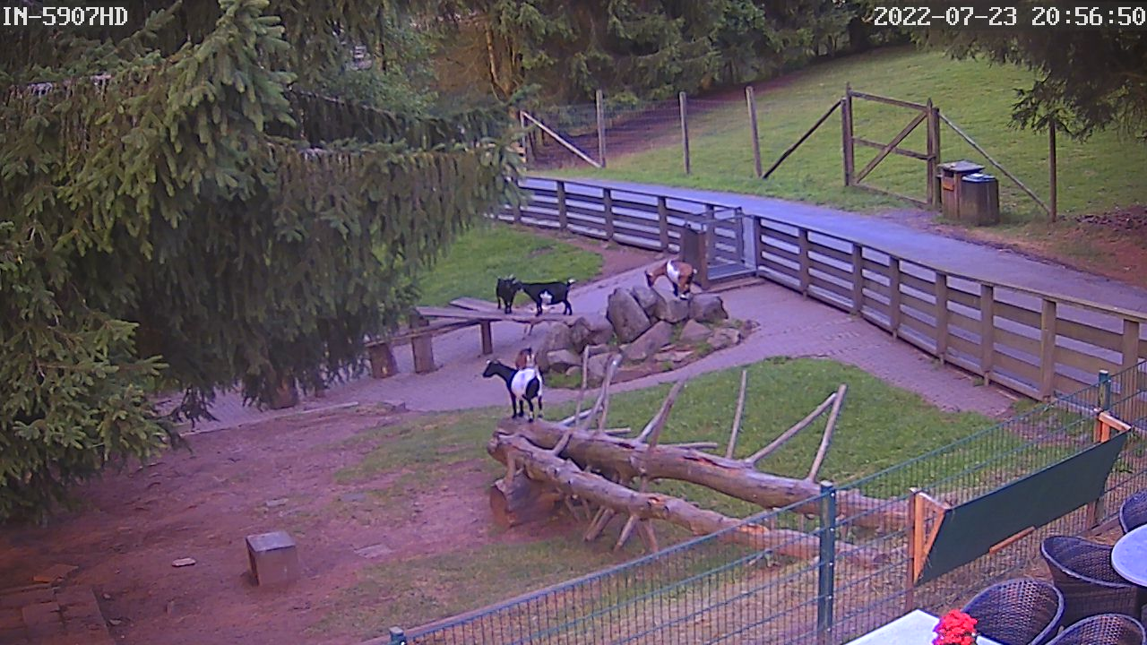 Webcam Wildpark